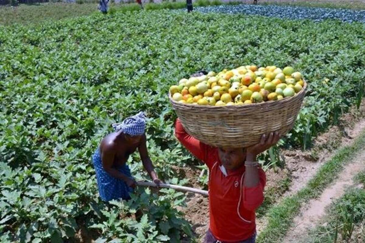 As a comparison, the average net income of large farmers is about Rs 27,000 which translates to nearly 6x the per hectare productivity of a small farmer.
